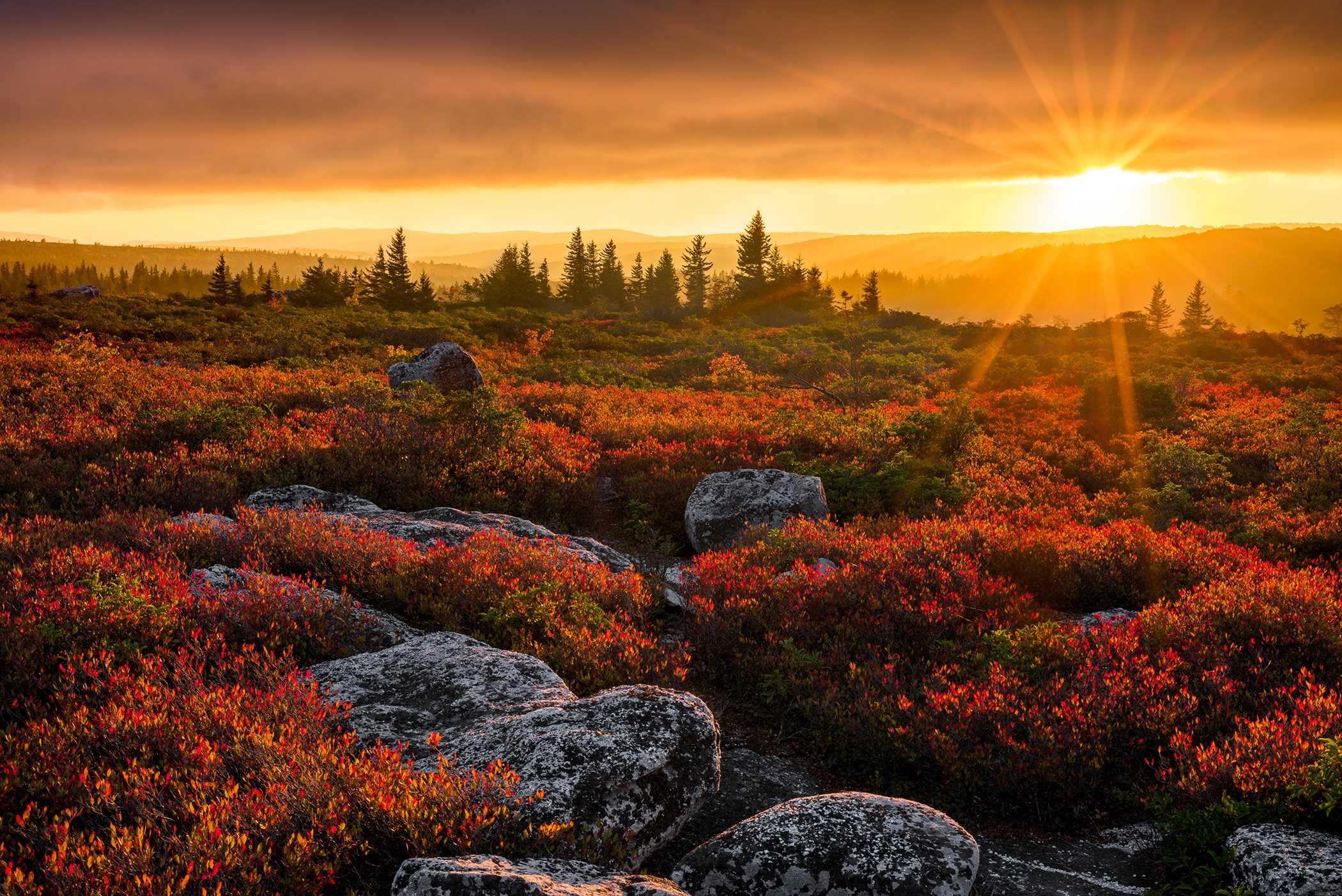 A field of orange flowers and rocks leading to a forest and mountains at sunset